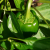 How To Grow Sweet Peppers in a Container